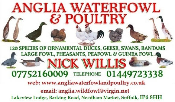 logo_for_anglia_waterfowl_and_poultry_website_waterfowl_and_poultry_breeders_suffolk